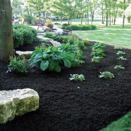 Can I Use Black Mulch for Vegetable Garden?