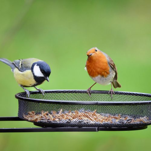 How Can I Keep Birds Out of my Vegetable Garden
