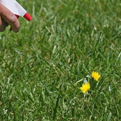 How To Get Rid Of Weeds In Mulch Beds