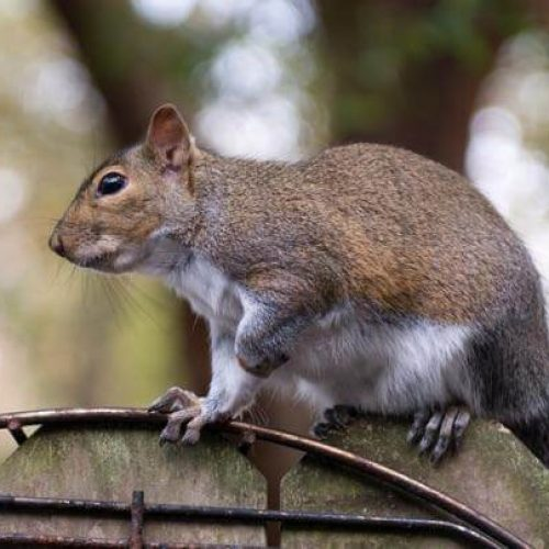How Can I Keep Squirrels Out of My Vegetable Garden?