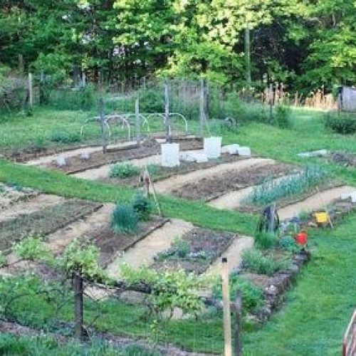 Can You Plant A Vegetable Garden On A Slope?