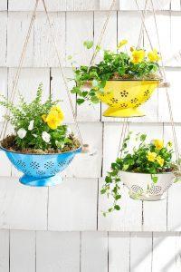 Colander Herb Garden