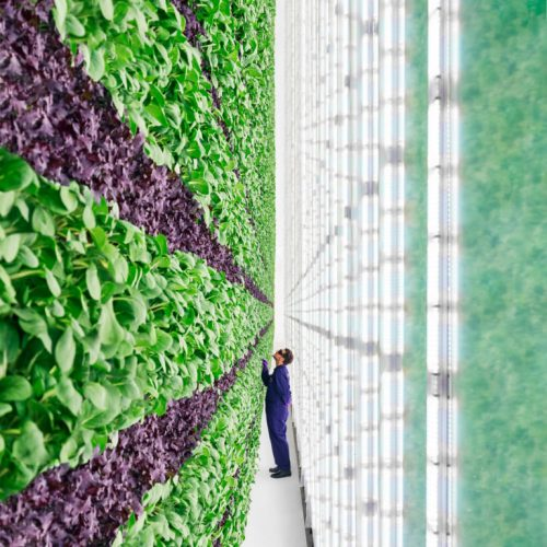 How to Start Vertical Gardening: Simple Guide For Beginners