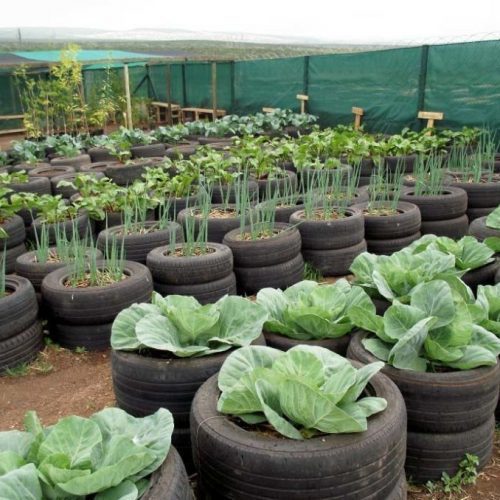 How To Use Old Tires In A Garden [12 Easy Tips on Tire Gardening]
